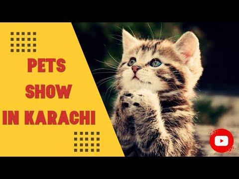 Me-o Pets Show | Maritime Museum Karachi 2019