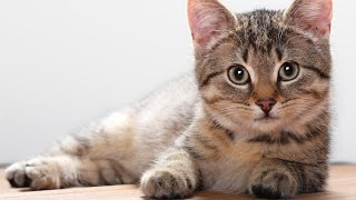 Кототерапия. Лечебные свойства кошек. Часть 1