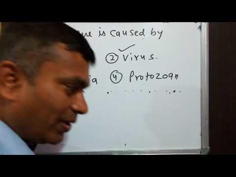 Mosquito ,disease Dengue Aedes Mosquito