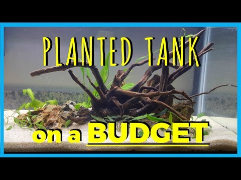 5 TIPS TO SAVE MONEY!!! - Planted Tank on a Budget