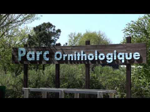 Parc Ornithologique Du Teich