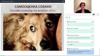 Вебинар Самооценка собаки 9 ноября 2017 Зоопсихолог Лидия Ушакова