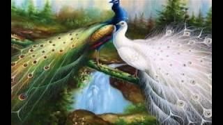 Download lagu Best Beautiful Peacock HD Images Photos And Wallpaper Download