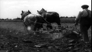 A farmer works with a horse drawn plow on a wheat field in Heidelberg, Germany. HD Stock Footage