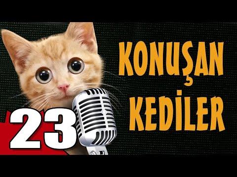 Konuşan Kediler 23 - En Komik Kedi ları