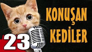 Konuşan Kediler 23 - En Komik Kedi Videoları