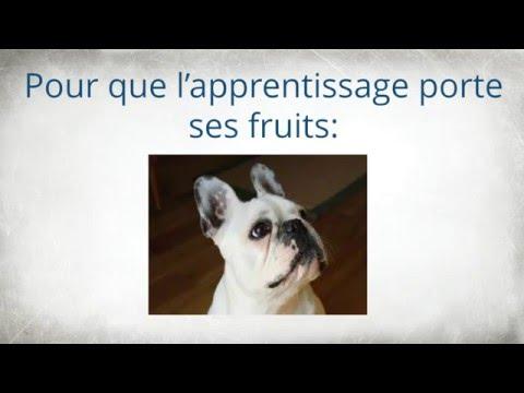 comment-dresser-un-bouledogue-français---comment-éduquer-son-bouledogue-français