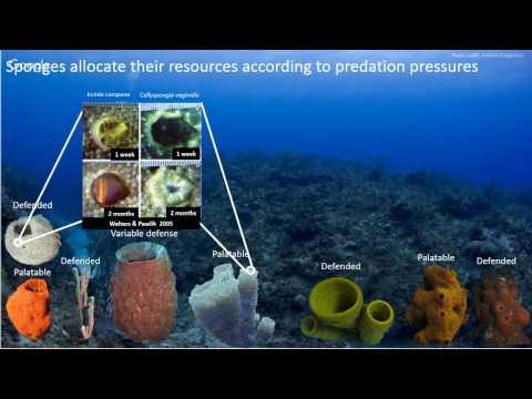 Theater Thursdays - Interesting Invertebrate Investigations - Outreach Talk #1