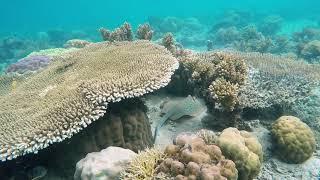 Strange underwater animal