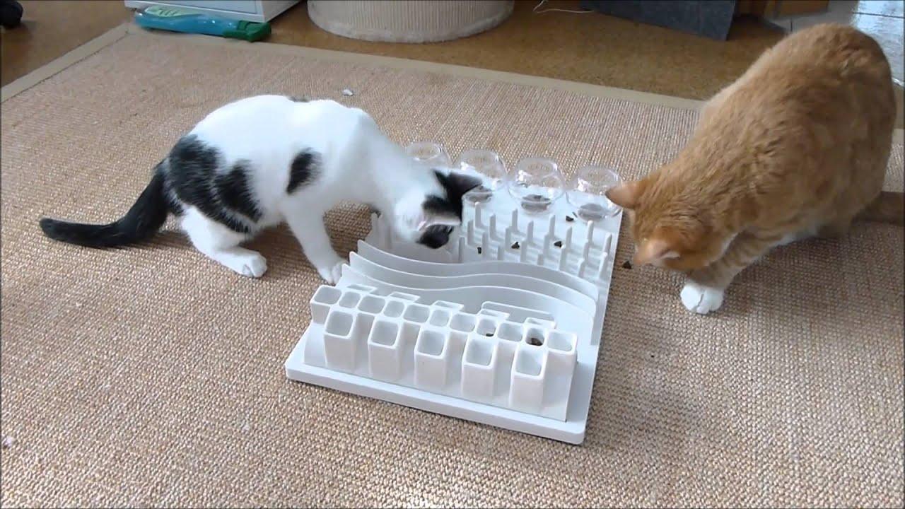 Ataxie Bei Katzen