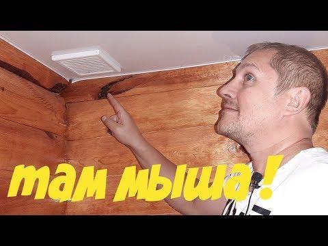 Под натяжным потолком мышь что делать