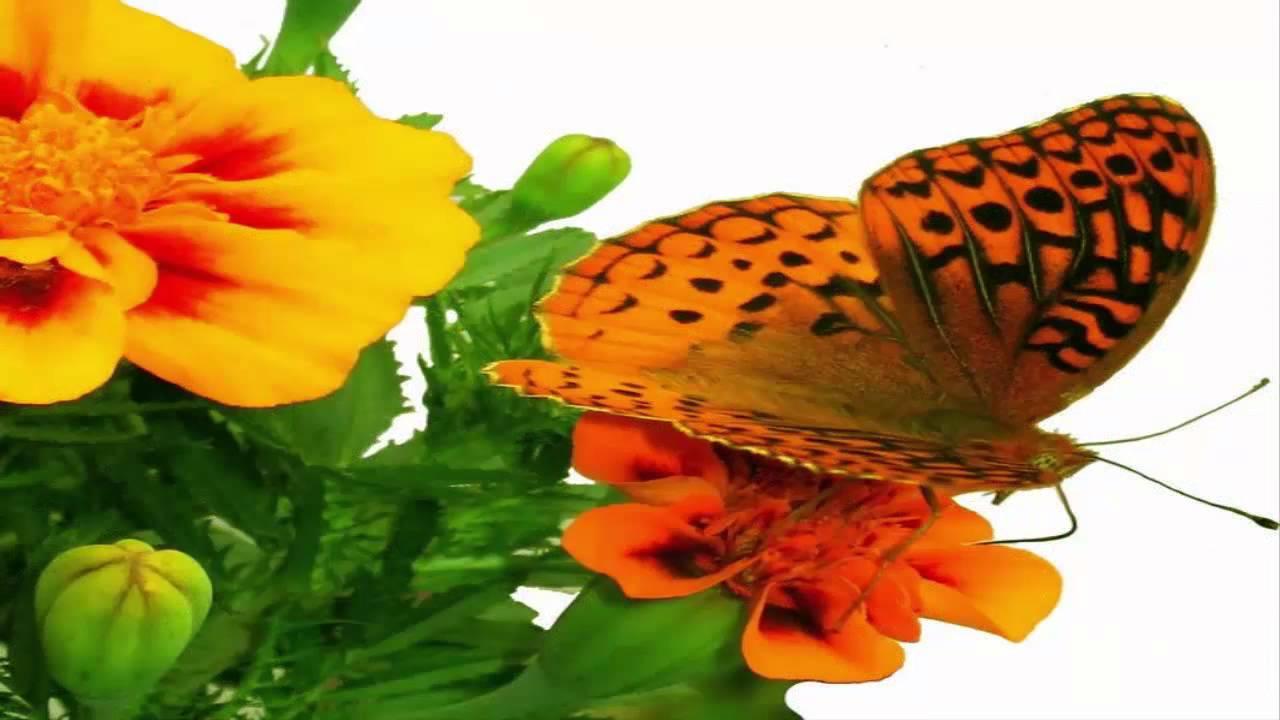 Image result for فراشات الربيع الجميلة