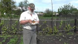 видео Бахчевые культуры (арбуз, дыня, тыква)
