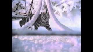 Whiskas Werbung 1998 Schnee