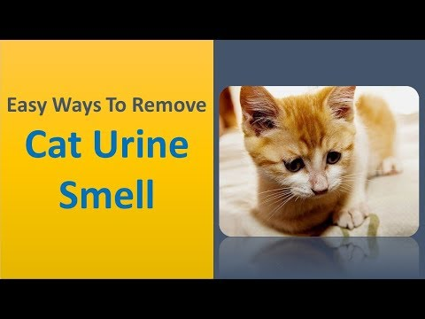 DIY Steps To Get Rid Of Cat Urine Smell - Easy Ways To Remove Cat Urine Smell