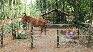 Build Hut for horse - House horse