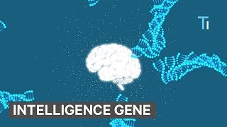 Scientists discovered new genes that make humans intelligent