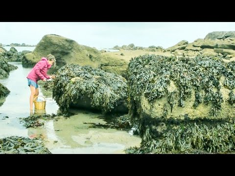 Foraging Seaweed: Harvesting a French Coastal Superfood