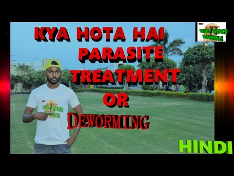 All About Dogs Deworming Or Parasite Treatment With Solutions in Hindi || dog training in hindi ||