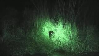 охота на бобра весной