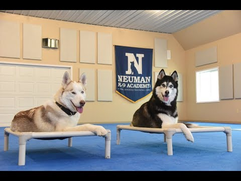 Paxson (Siberian Husky) Boot Camp Dog Training Video Demonstration