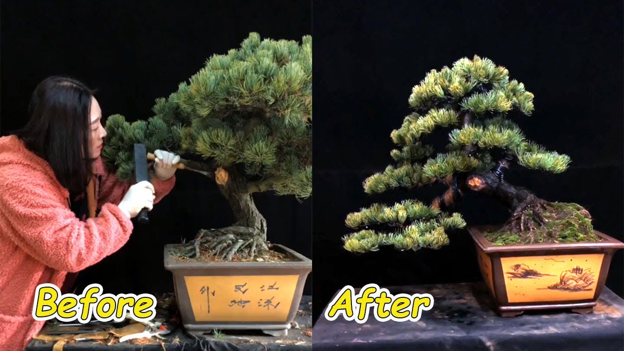 How to bend a bonsai - great bonsai bending skills #62