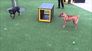 Dogs Trust Manchester - Laila & Bassett