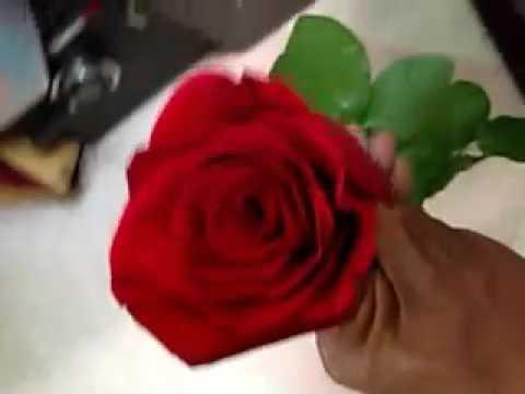 Que Significa La Rosa Roja El Significado De La Rosa Roja Youtube