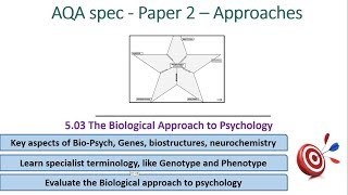 Biological Psychology - Approaches (5.03) Psychology AQA paper 2
