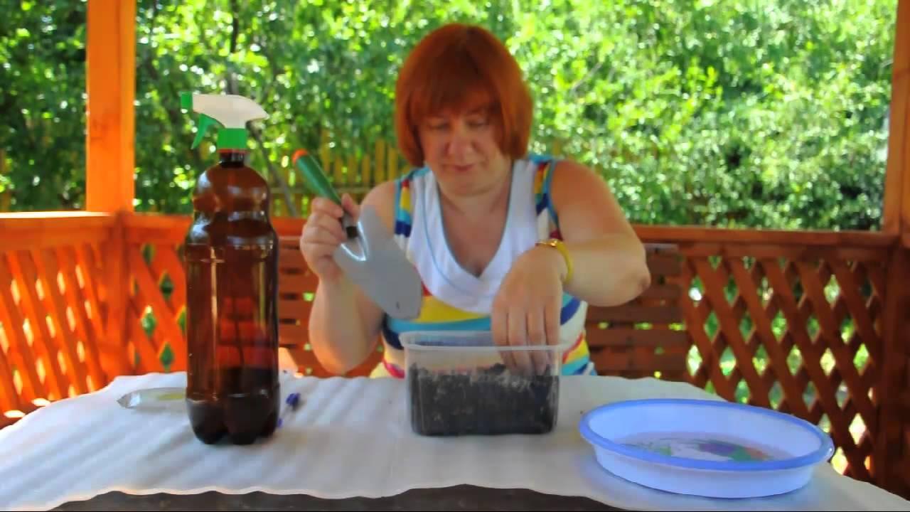 Как вырастить семена орхидеи в домашних условиях фото