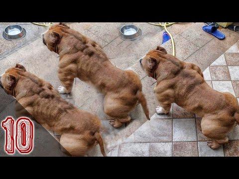 I 10 Cani Più Pericolosi Al Mondo #2