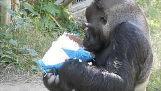Ndume Celebrates Koko