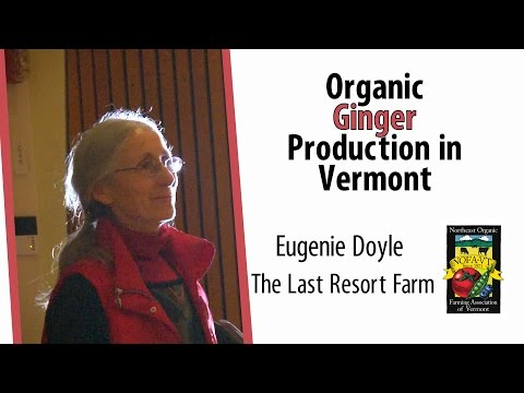 Organic Ginger Production in Vermont