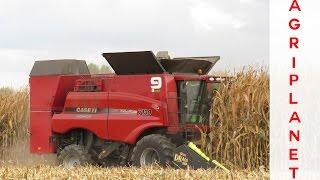 case ih axial flow 7130 harcob claas lexion 570c  fendt vario 716 515 309 411  corn harvest