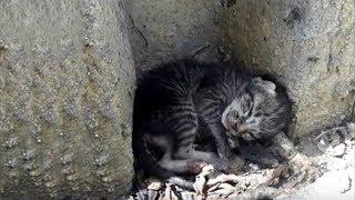 Маленький котенок родился на улице и остался один. Но он надеялся, что встретит своего человека