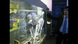 2012 08 Piranha 3DD 3