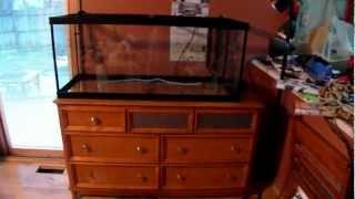 75 Gallon Aquarium Setup