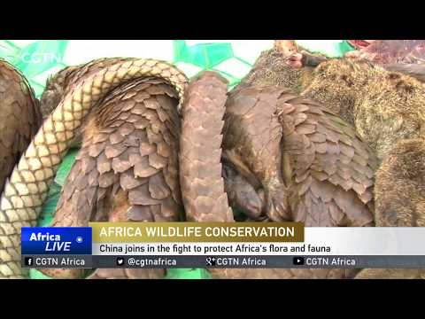 China joins in the fight to protect Africa's flora and fauna