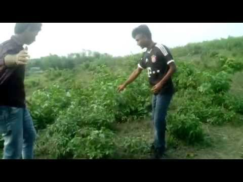 sylhet tour(sust)_fun video Hamdard University Bangladesh