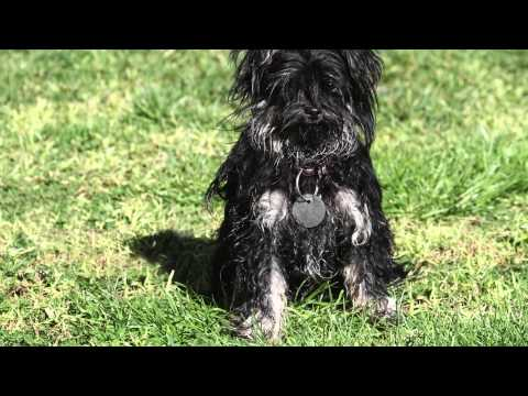 Keen eye saves shih tzu's life || The Lost Dogs' Home