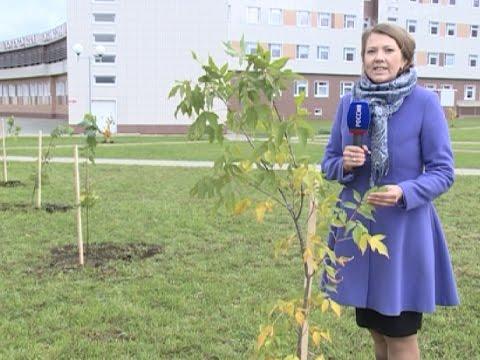 Новая аллея появились сегодня возле областной детской больницы в Вологде