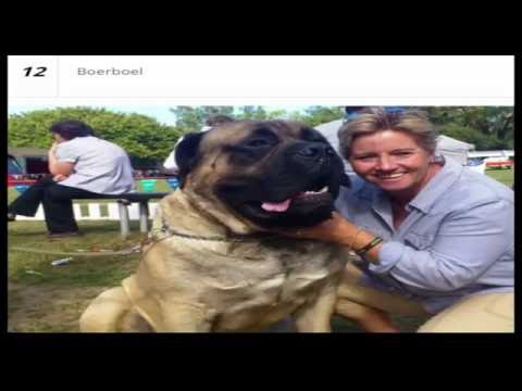 Top 15 Largest Dog Breeds