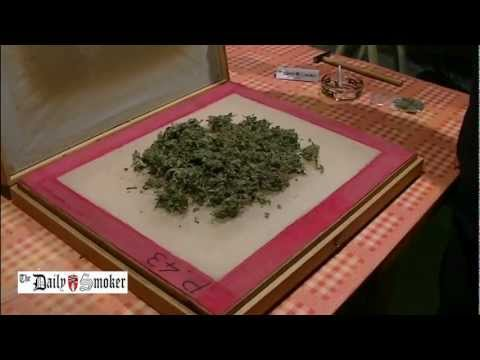 Daily Smoker - making hash - roll a joint