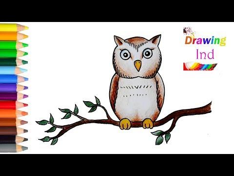 Sketsa Gambar Grafiti Burung Hantu Gambar Burung Hantu