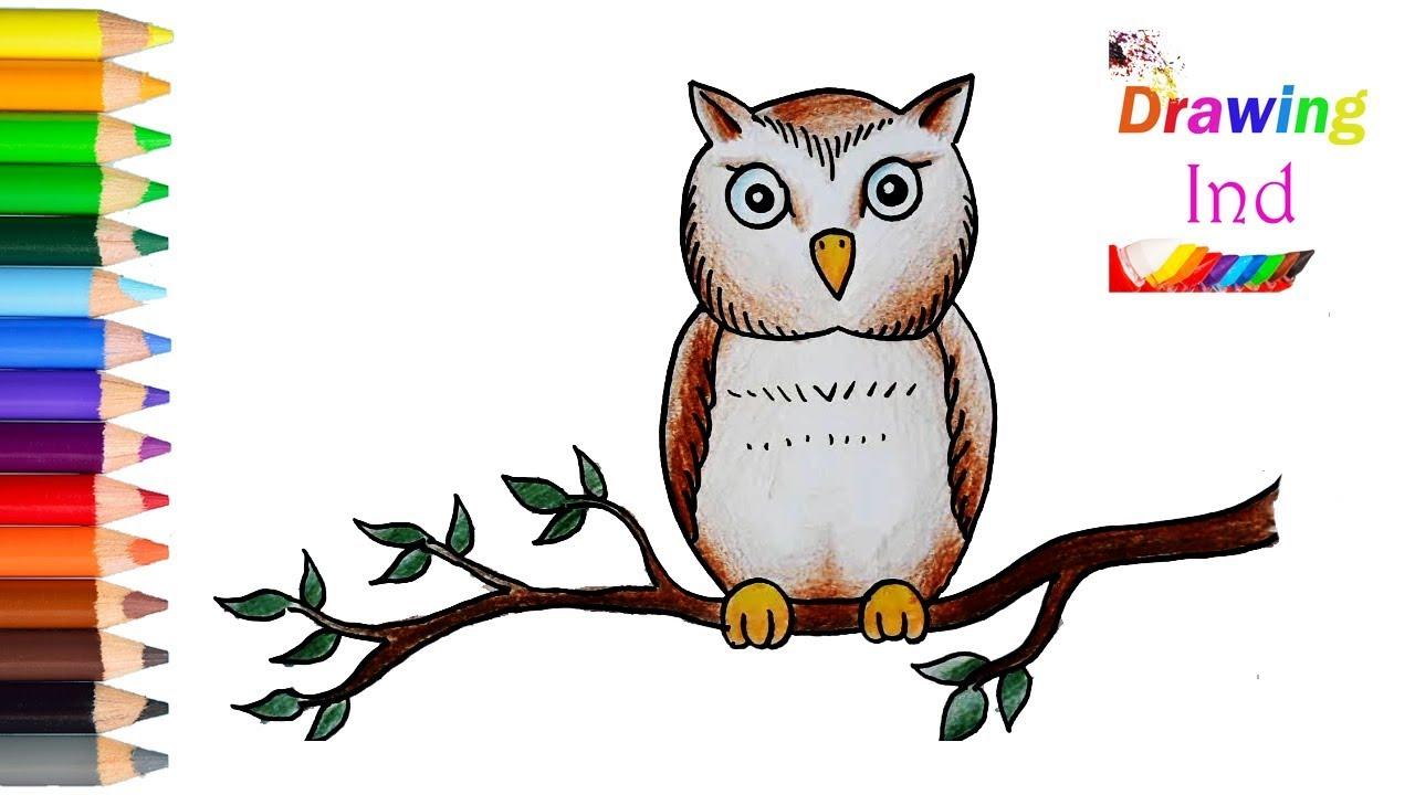 inilah Cara Mudah Menggambar dan Mewarnai  Owl Burung  Hantu