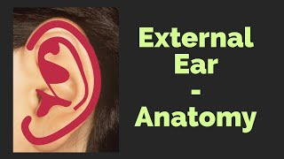 Pinna | Anatomy of External Ear | Ear Nose Throat