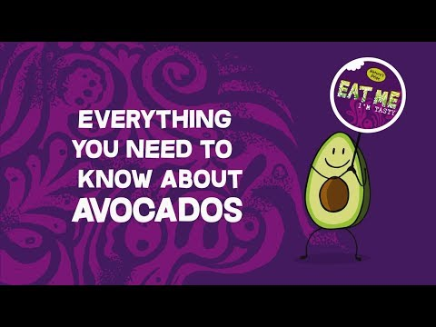 Everything you need to know about avocados!