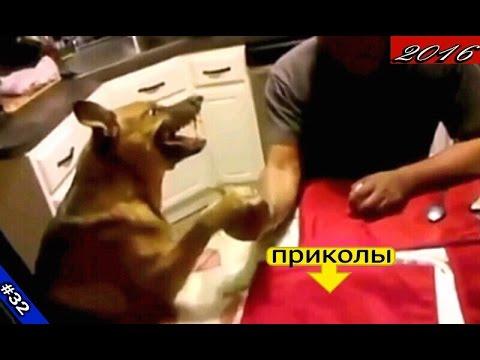 ЛУЧШИЕ ПРИКОЛЫ 2016!!!Самое ржачное видео