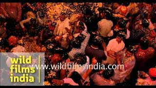 Slow motion -  Flower Holi at Keshi Ghat, Vrindavan