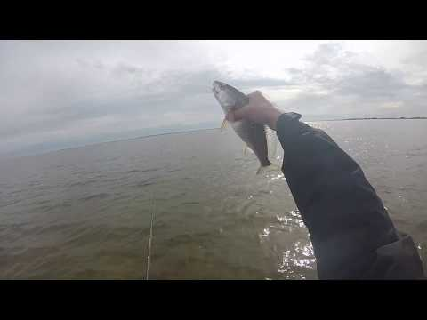 Limit Of Trout On Soft Plastics! Wade Fishing Rockport TX
